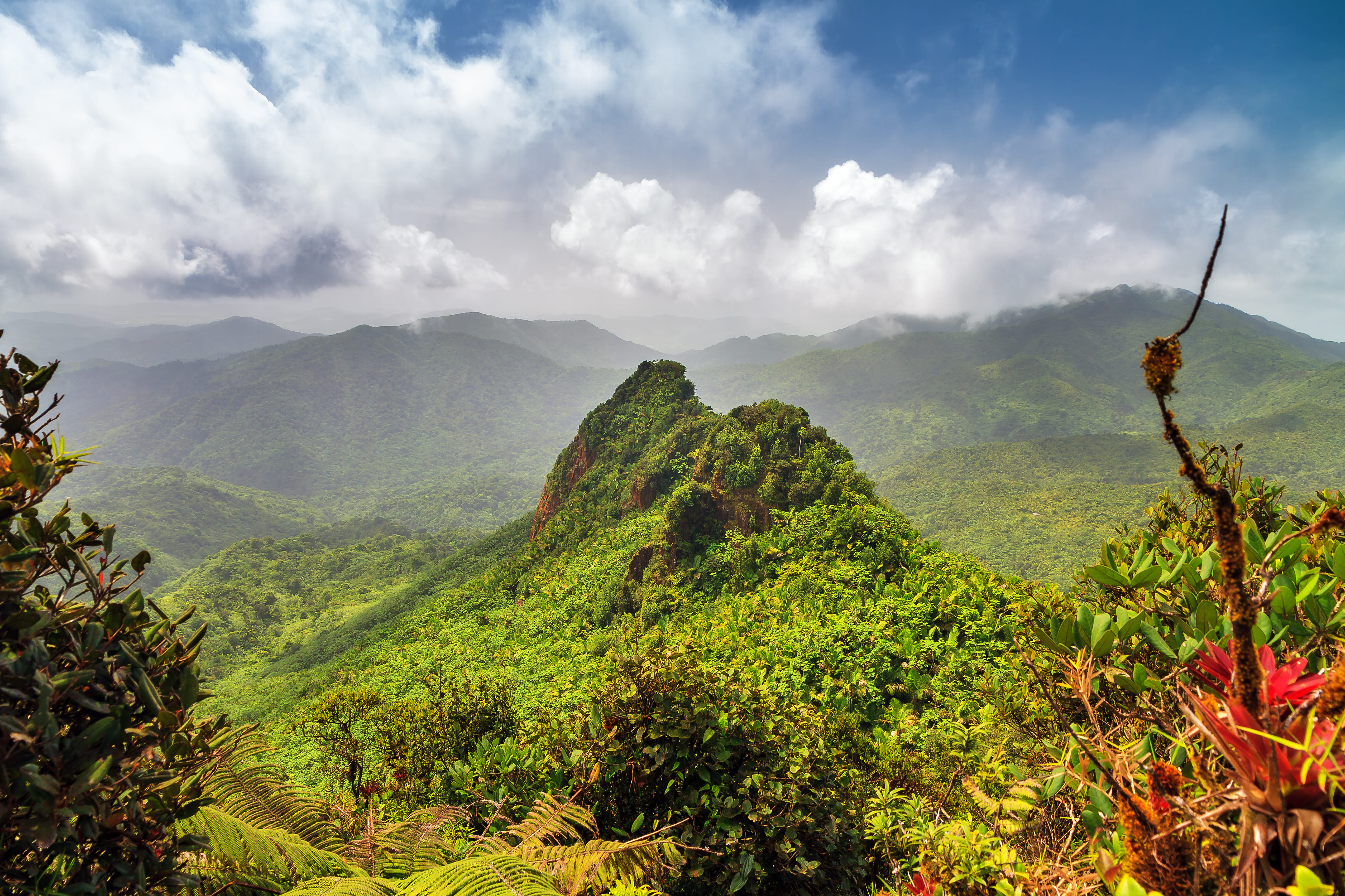 EL Yunque National Forest - 1