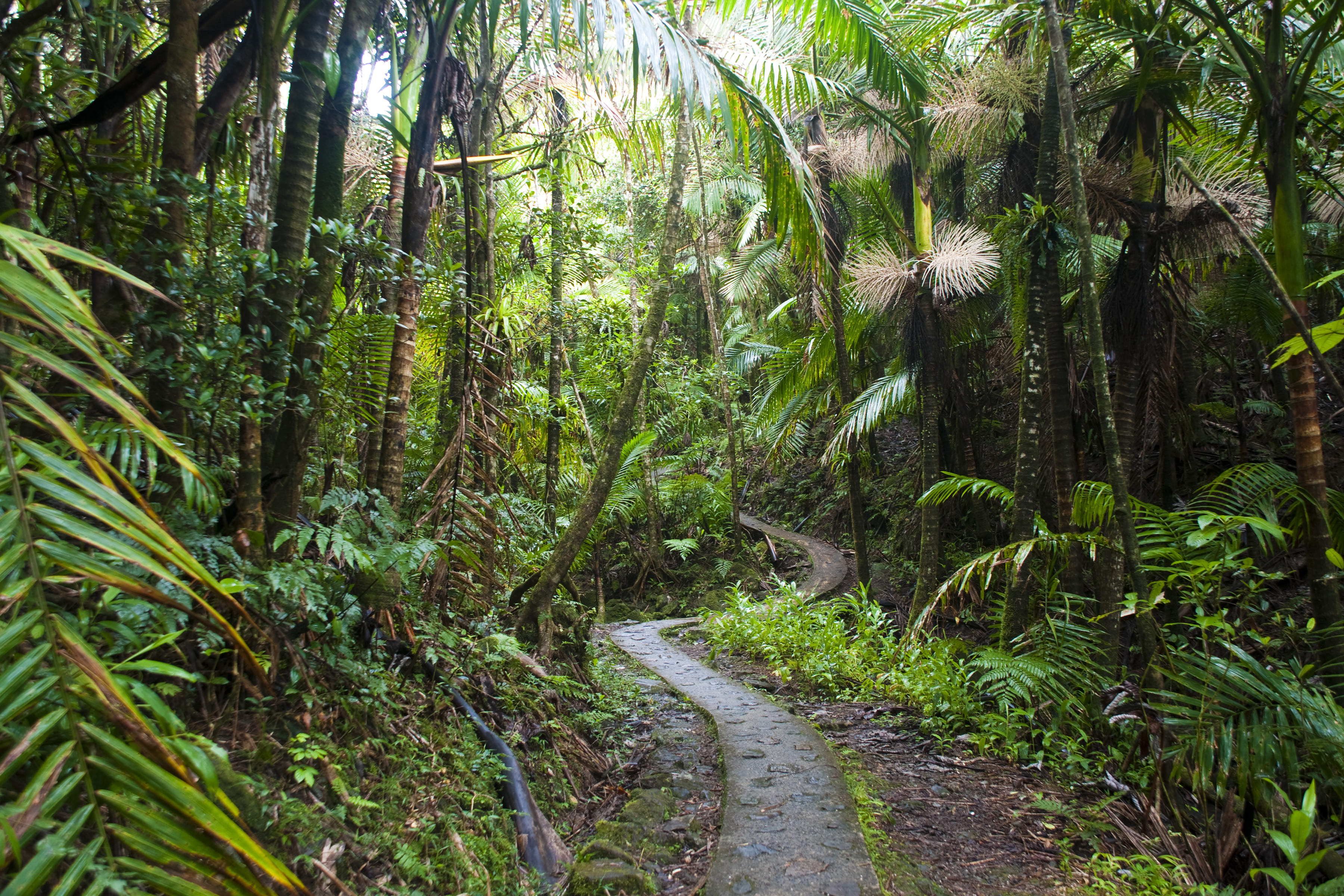 EL Yunque National Forest - 2