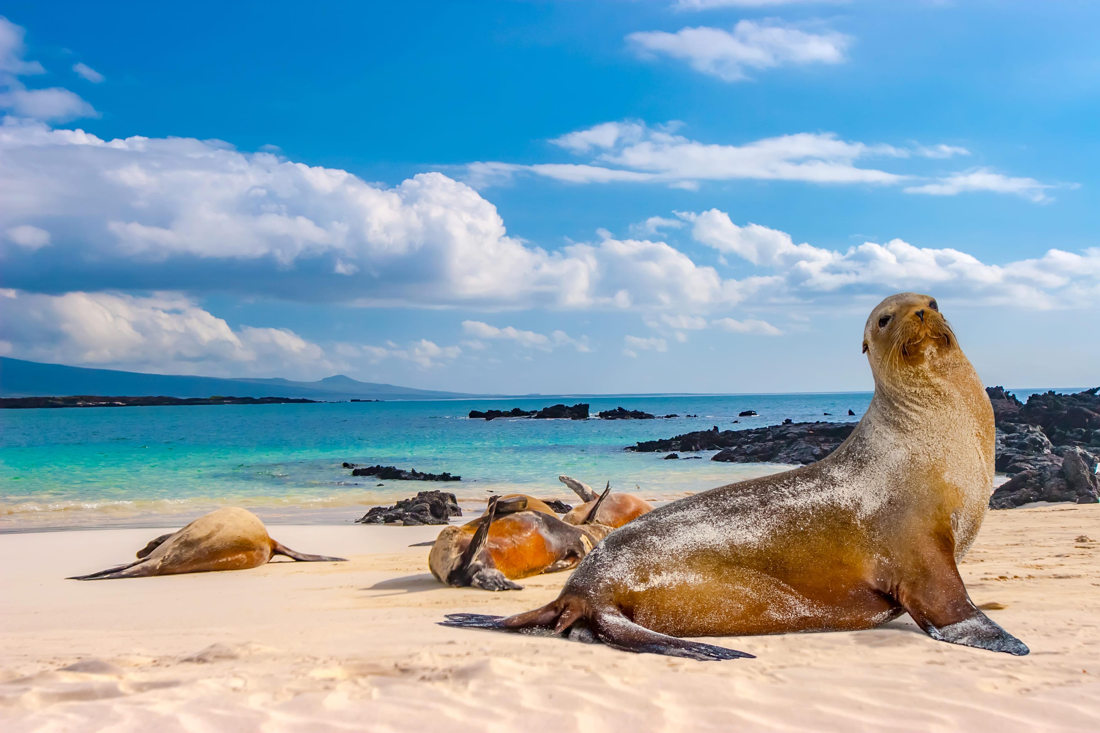 Galápagos Islands - 3
