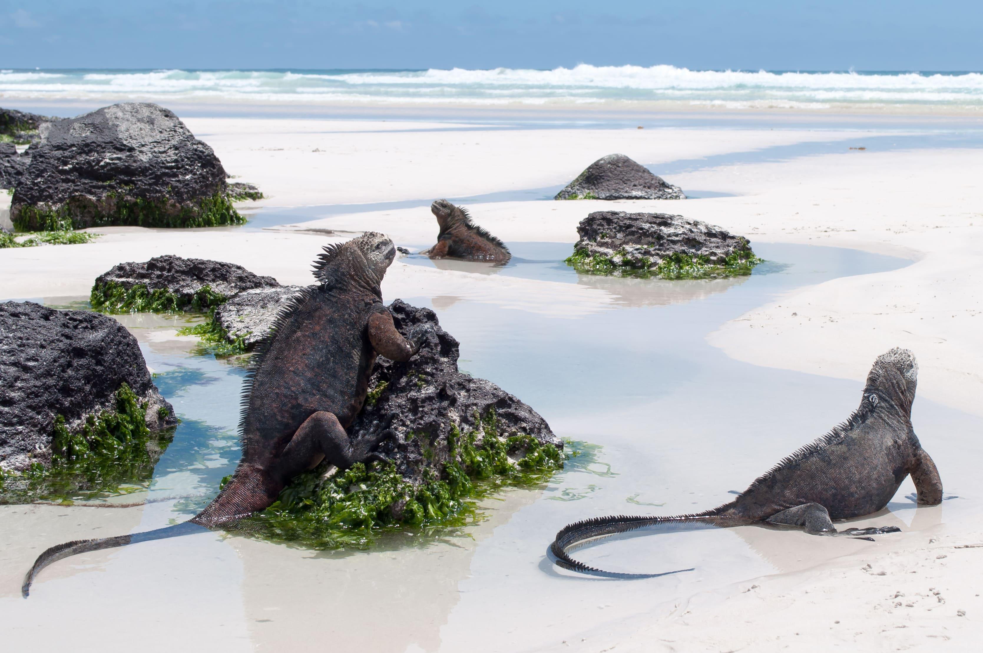 Galápagos Islands - 4