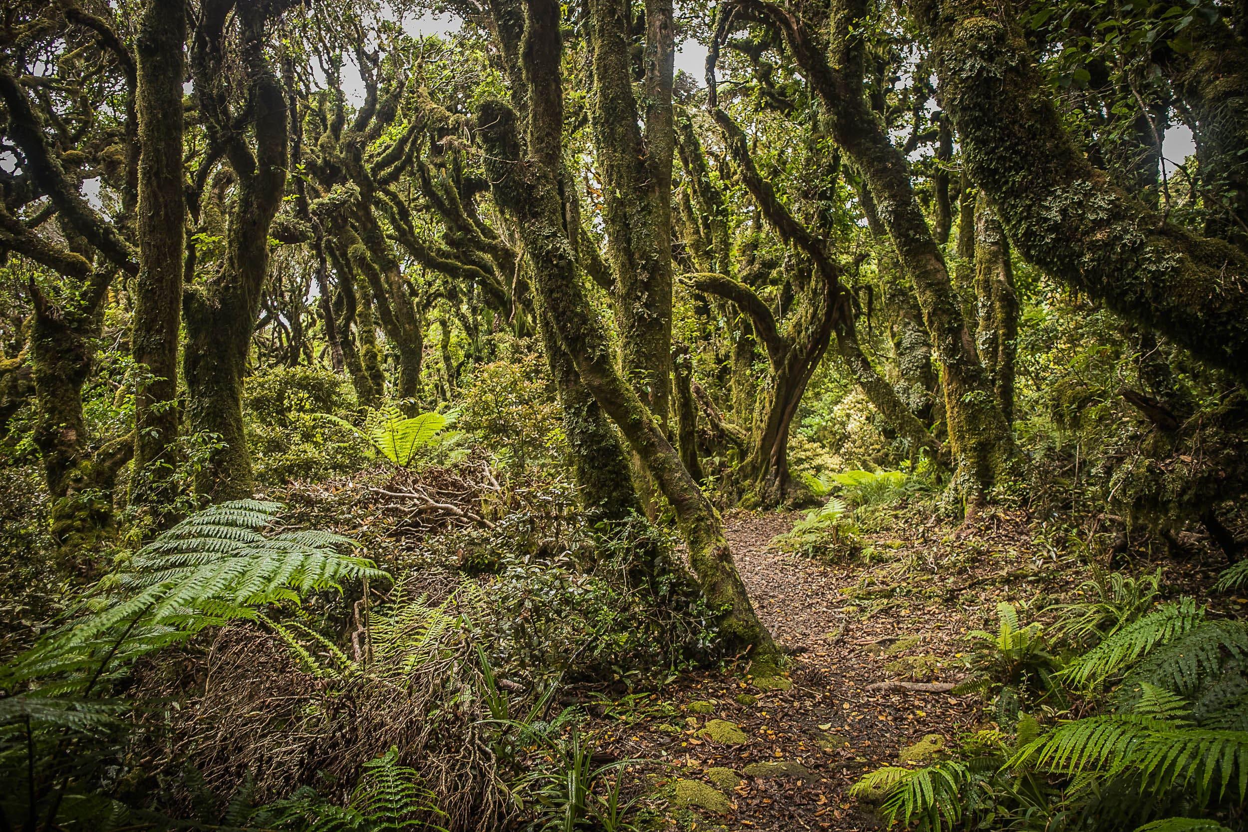 Goblin Forest - 1