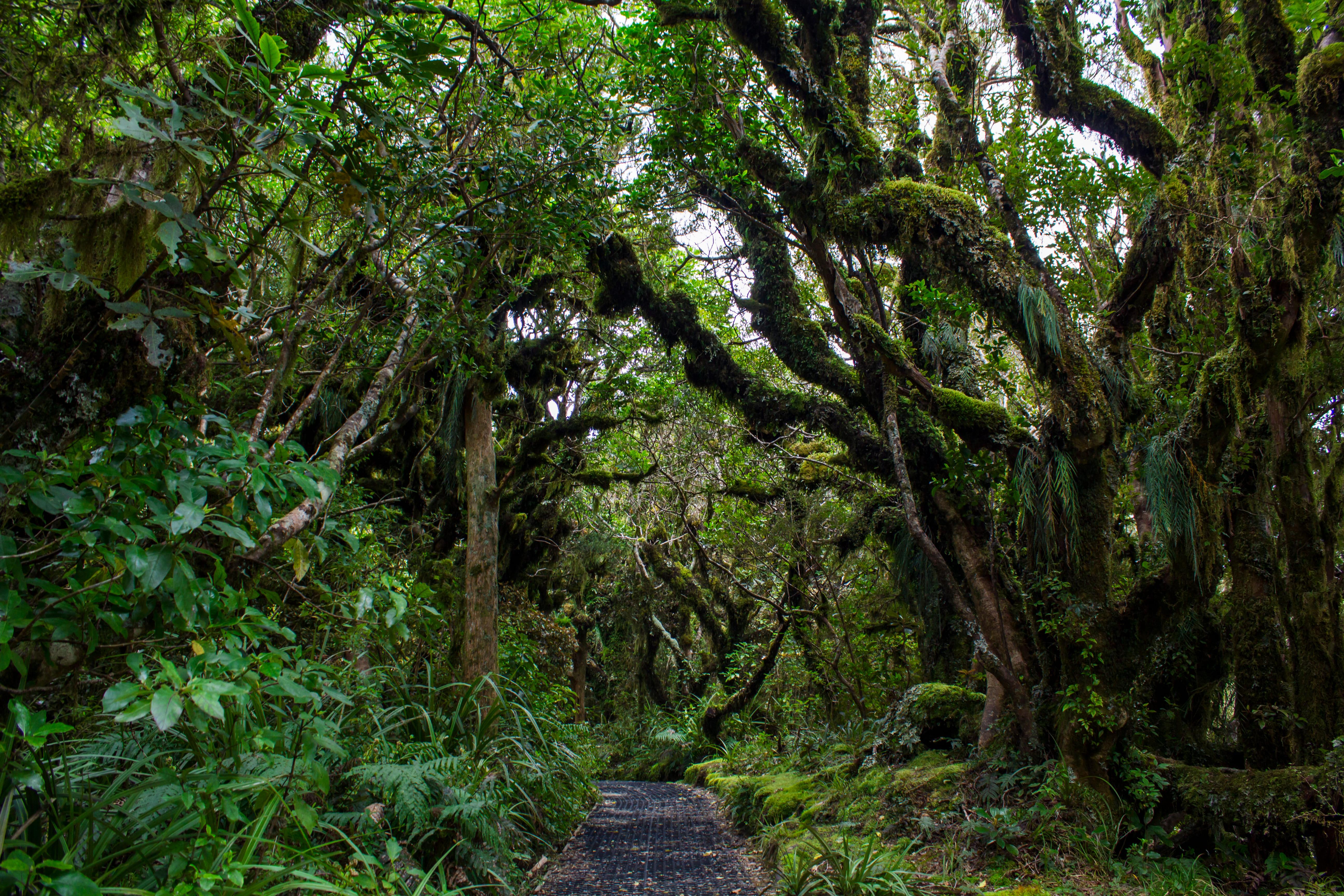 Goblin Forest - 2