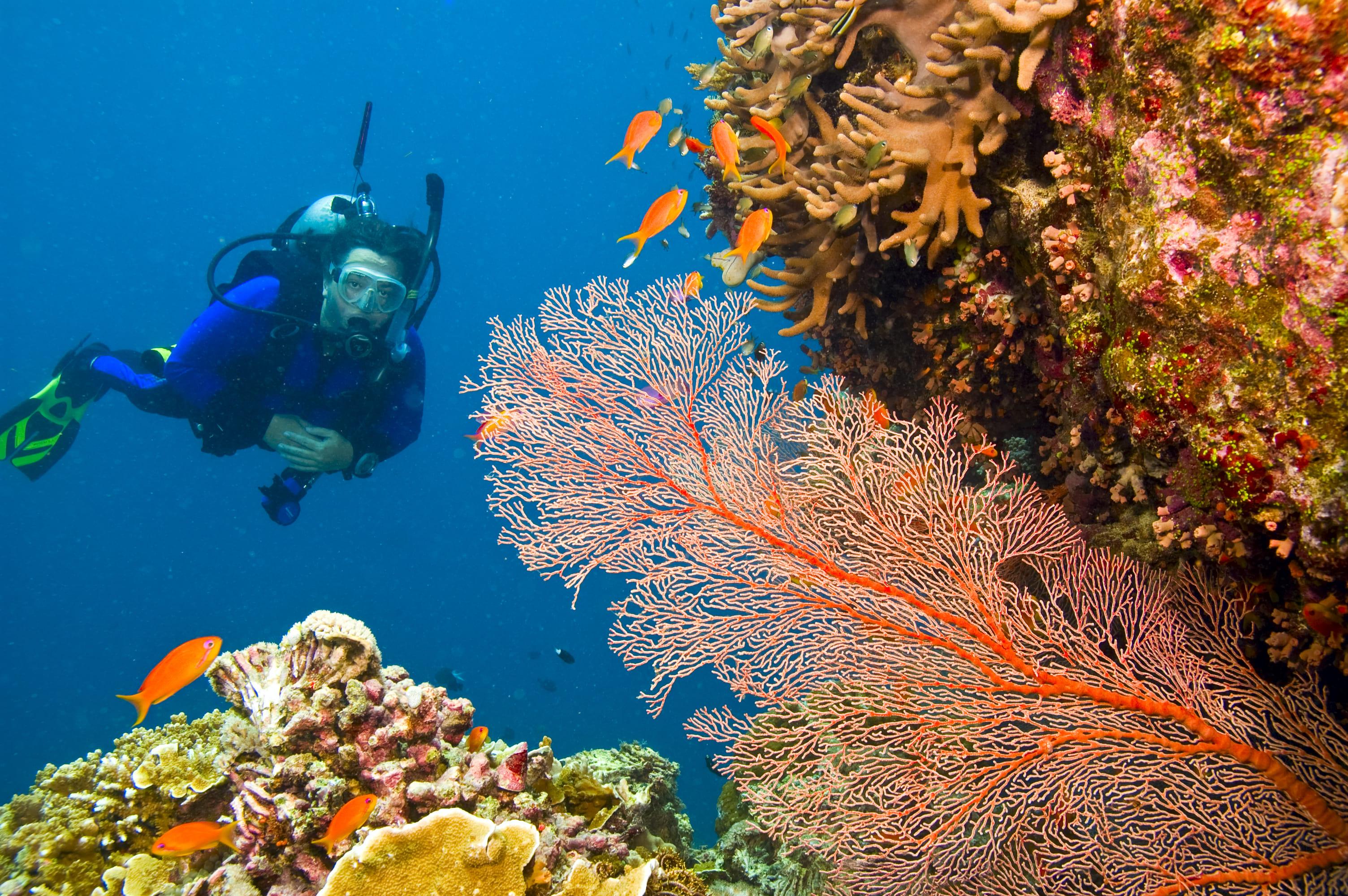 Great Barrier Reef - 4