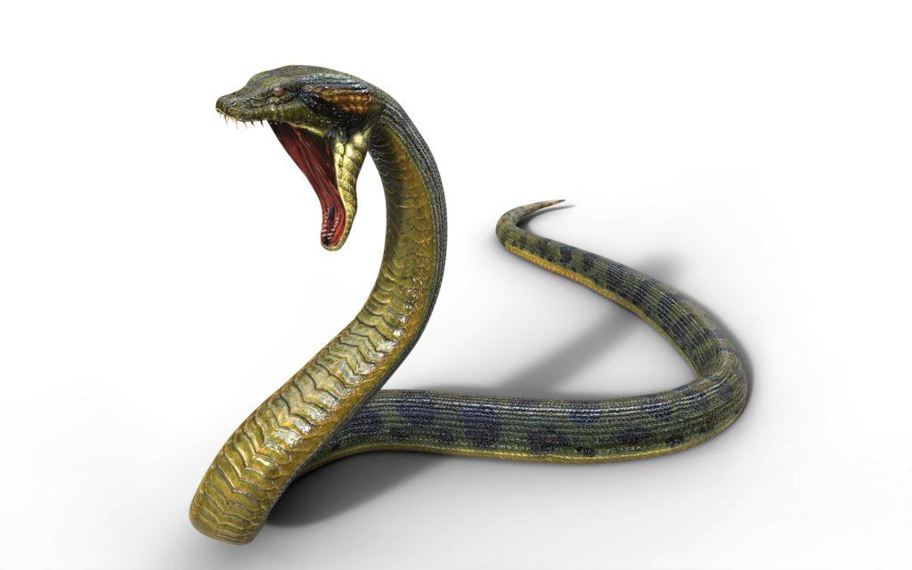 Snake Tattoo Design - 2