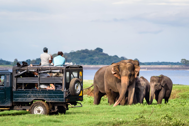 Yala National Park - 1